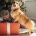 Thumbnail for The Best Holiday Gifts for Your Pet this Year!